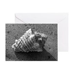 Conch Shell (Black and White) Greeting Cards