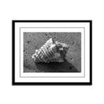 Conch Shell (Black and White) Framed Panel Print