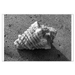 Conch Shell (Black and White) Posters
