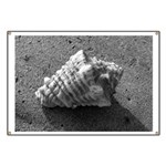 Conch Shell (Black and White) Banner