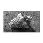 Conch Shell (Black and White) Wall Decal