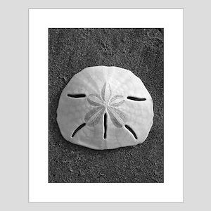Sand Dollar Seashell Posters