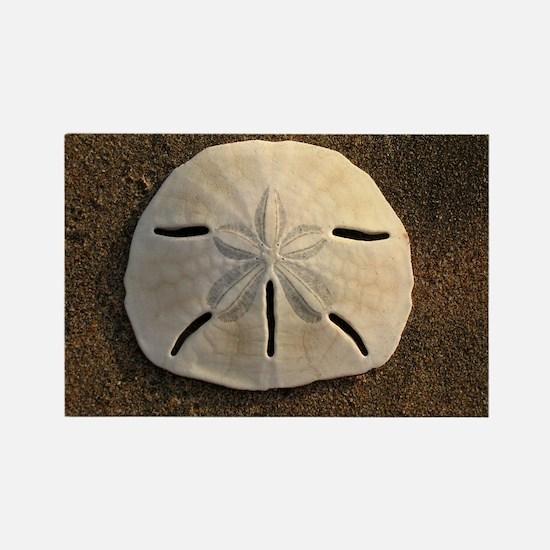 Sand Dollar Seashell Magnets