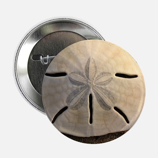 "Sand Dollar Seashell 2.25"" Button"