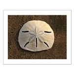 Sand Dollar Seashell Posters