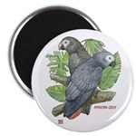 Tropical African Greys Magnet