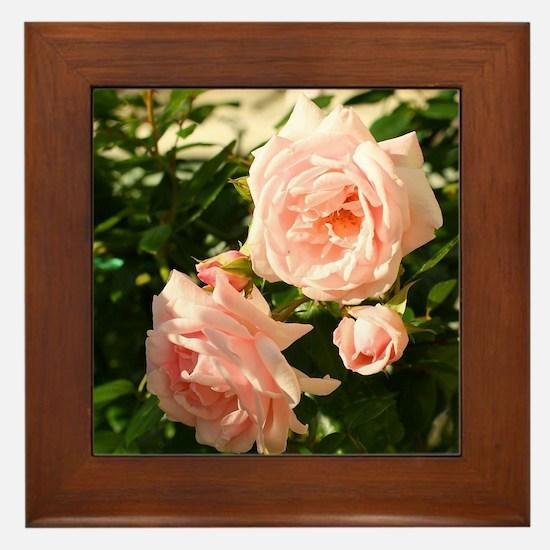 Pink roses Framed Tile