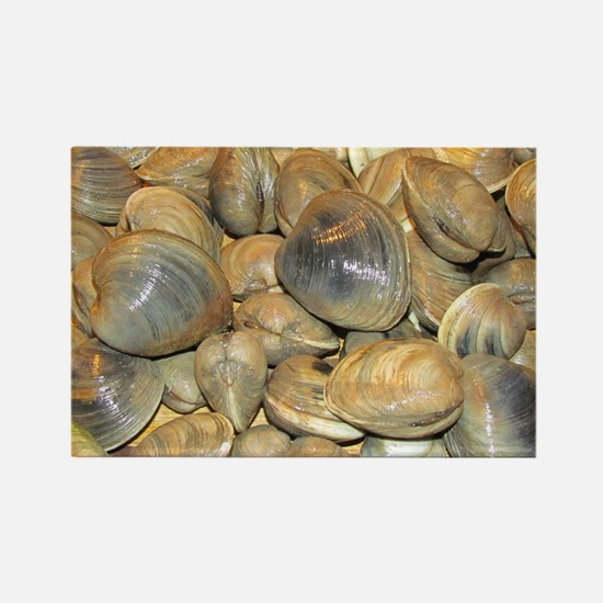 Clams Magnets