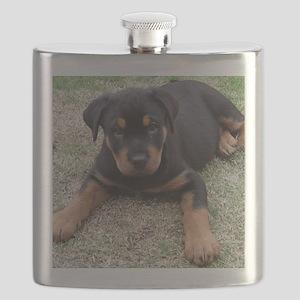 Rottweiler Puppy Flask