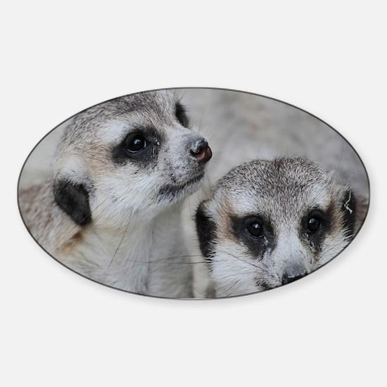 adorable meerkats 02 Decal