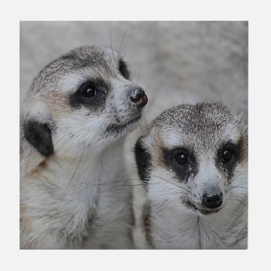 adorable meerkats 02 Tile Coaster