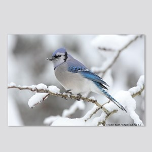 Blue Jay / Mdf GNU CCS-A Postcards (Package of 8)