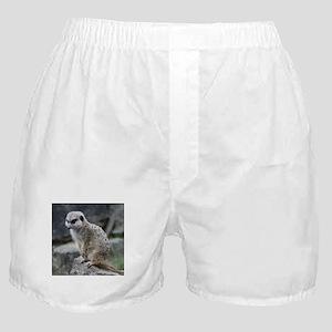 lovely meerkat Boxer Shorts