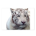 Disappearing Tigers Postcards (Package of 8)