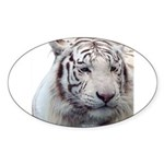 Disappearing Tigers Sticker