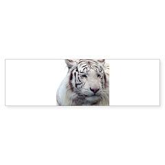 Disappearing Tigers Bumper Bumper Sticker