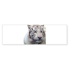 Disappearing Tigers Bumper Bumper Sticker