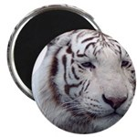 Disappearing Tigers Magnets