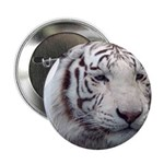 Disappearing Tigers 2.25