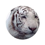 Disappearing Tigers 3.5