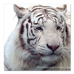 Disappearing Tigers Square Car Magnet 3