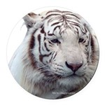 Disappearing Tigers Round Car Magnet