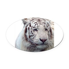 Disappearing Tigers Oval Car Magnet