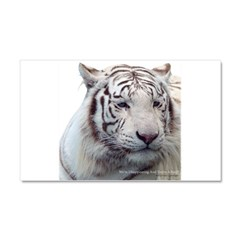 Disappearing Tigers Car Magnet 20 x 12