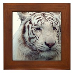Disappearing Tigers Framed Tile