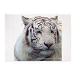 Disappearing Tigers 5'x7'Area Rug