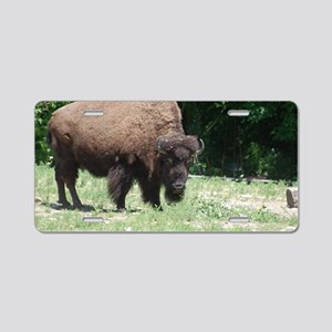 Grazing Buffalo Aluminum License Plate