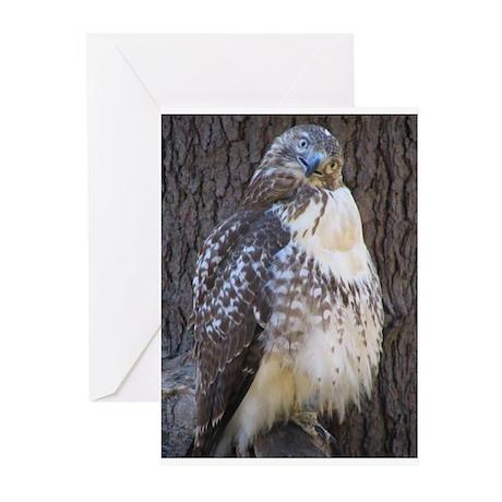 Hawk Eye Greeting Cards (Pk of 10)