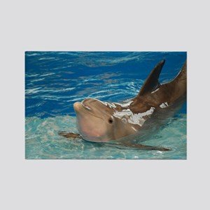Posing Dolphin Rectangle Magnet