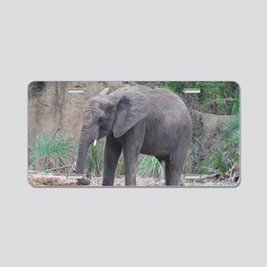 Young Elephant Aluminum License Plate