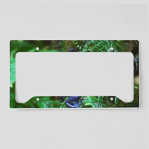 Blue Poison Dart Frog License Plate Holder