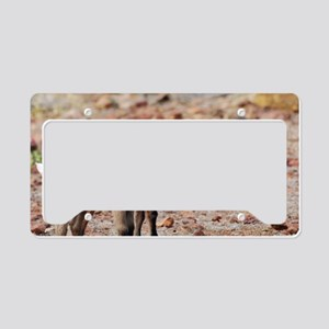 Baby Goats License Plate Holder