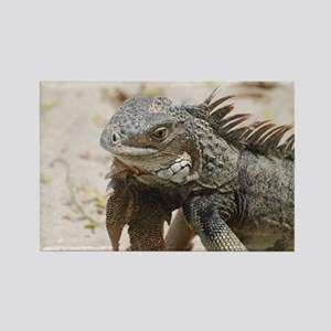 Iguana in the Tropics Rectangle Magnet