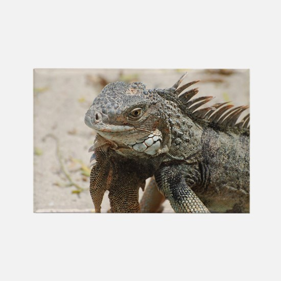Iguana in the Tropics Rectangle Magnet
