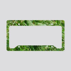 Cute Green Lizard License Plate Holder