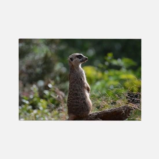 Meerkat Sentry Rectangle Magnet