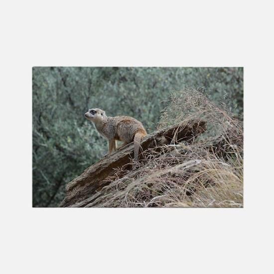 Meerkat in the Wild Rectangle Magnet