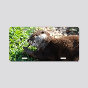 River Otter Chewing on a St Aluminum License Plate