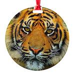 The Last Tiger? Ornament