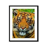 The Last Tiger? Framed Panel Print