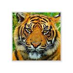 The Last Tiger? Sticker