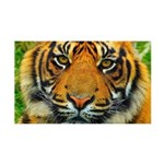 The Last Tiger? Wall Decal