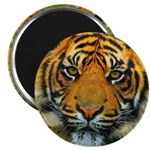 The Last Tiger? Magnets