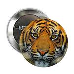 The Last Tiger? 2.25