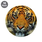 The Last Tiger? 3.5