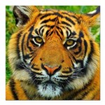 The Last Tiger? Square Car Magnet 3